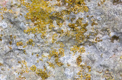Surface of the old stone with yellow green moss Stock Photos
