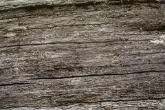 The surface of the old tree, background, texture Stock Image