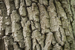 The surface of the old tree, background, texture, surface Stock Photography