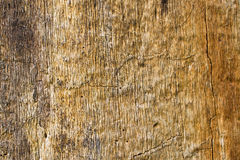 The surface of the old tree trunk. For your design Royalty Free Stock Photography