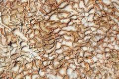 Surface of Pamukkale Stock Image