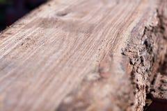 Surface plane fraîchement sciée sur un tronc d'arbre Photographie stock