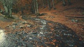 Surface pure de l'eau d'écoulement de courant de feuillage d'automne clips vidéos