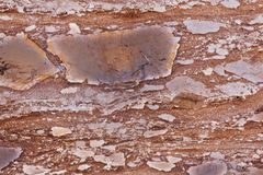 Surface of a red sandstone with siliceous particles. Surface of a red sandstone of Jurassic age, with siliceous particles Stock Photography