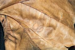 Leaf sand bank in autumn. Surface with ribbings of a leaf sand bank Stock Photography