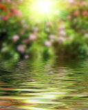 Surface Rippled of water and blur nature background Stock Image
