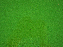 The surface of river is covered with green duckweed Royalty Free Stock Photos