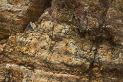 Surface rock fracture Royalty Free Stock Images