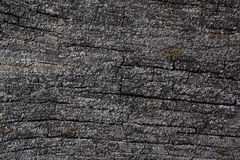 Surface of rotten wood Royalty Free Stock Image