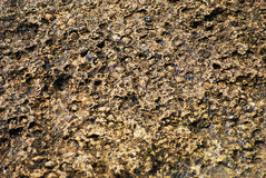 Surface of the rough stone Royalty Free Stock Photography