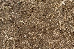 Surface of sawdust and dirt as a texture. Brown, mud, nature, pattern, abstract, closeup, rough, textured, wood, backdrop, grunge, material, wooden, background royalty free stock images
