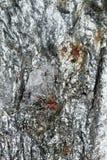 Surface se reflétante de minerai cassé avec les inclusions rouges Images stock