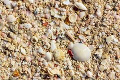Surface of the sea coast of a variety of shells, texture background royalty free stock image