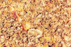 Surface of the sea coast of a variety of shells, texture background royalty free stock photos