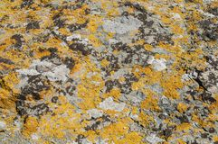Sea rock surface with lichens closeup Stock Photo