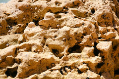 Surface of shell rock Stock Images