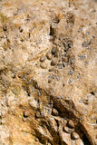 Surface of shell rock Royalty Free Stock Image