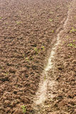 Surface soil tillage. Surface soil tillage agriculture, which was completed in preparation for planting crops Royalty Free Stock Images