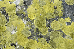 Surface stone with green lichen. Stock Photos