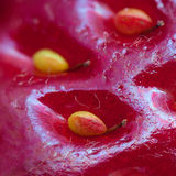 Surface of strawberry with seeds Royalty Free Stock Photography