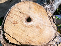 Surface of the stump is cut off Royalty Free Stock Photography