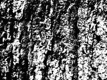 Surface superficielle par les agents d'écorce d'arbre Texture en bois d'écorce Texture âgée de panneau de bois de construction Photographie stock libre de droits