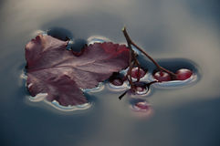 Surface tension,the berries sink in water. Surface tension,water,tree leaf,berries,red,blue,branch,physics,plants,nature,drowning,a leaf floats on water,the royalty free stock image