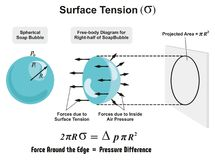Surface Tension. Physics Lesson of spherical soap bubble with all forces arrows and inside air pressure difference and projected area diagram for science Royalty Free Stock Photo