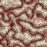 surface textur för hjärna vektor illustrationer