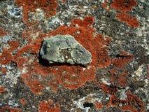 surface textur för rock Fotografering för Bildbyråer
