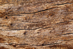 Surface texture of the old wood Stock Image