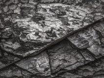 Surface texture of rock layer Stock Photos