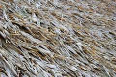 A surface of the thatched roof of house for background. Stock Photography