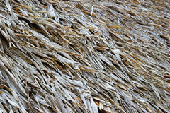 A surface of the thatched roof of house for background. Royalty Free Stock Photo