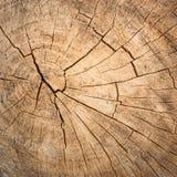 Surface of timber Royalty Free Stock Photos
