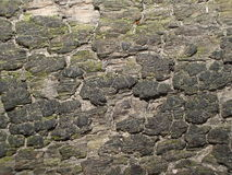 surface trä Royaltyfri Fotografi