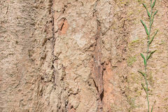 surface tree Royaltyfri Bild