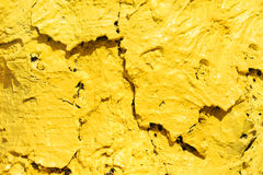 Bright Yellow Bark Royalty Free Stock Photography