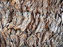 The surface of a tree showing ridges and grooving of the bark. As a background Royalty Free Stock Photo