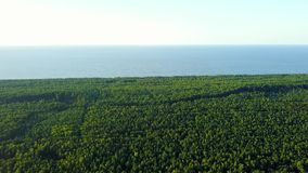 Surface of tree tops. Aerial panorama of spacious green surface of coniferous tree tops arranging enormous area of woods on baackground of blue sea stock video