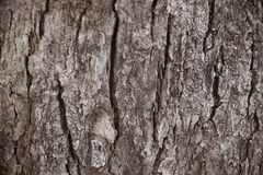 Surface Tree Stock Photo