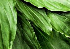 Surface tropicale de feuilles de fraîcheur dans le ton foncé en tant que nombreux fond de forêt images libres de droits