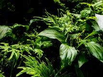 Surface tropicale de feuilles de fra?cheur dans le ton fonc? en tant que nombreux fond de for?t photo libre de droits