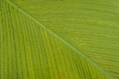 Surface verte de feuille Photos libres de droits