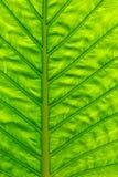 Surface verte de lame Photo libre de droits