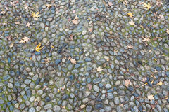 Surface of vintage pebble pavement Royalty Free Stock Photo