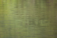 The surface of the water. Is green royalty free stock photos