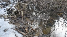Surface of water flowing in brook with melting ice. Surface of water gently flowing in brook or pond in forest with melting ice and in spring and old leaves and stock video footage