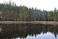The surface of the water. Is reflected in it, the autumn silence, the nature of Russia. central urals royalty free stock photography