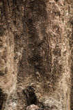 The surface of wood. Royalty Free Stock Photo